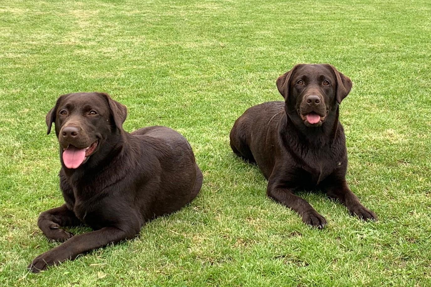 Frieda und Fiby Wesenstest 090619 bearb